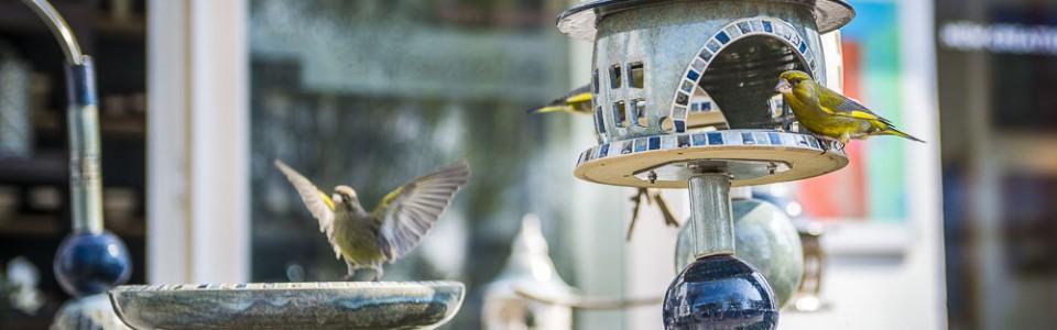 Vogelhaus Vogeltränke – Grünfinken vor dem Laden in Binz