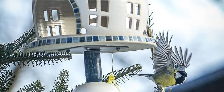 Vogelhaus – Kohlmeise